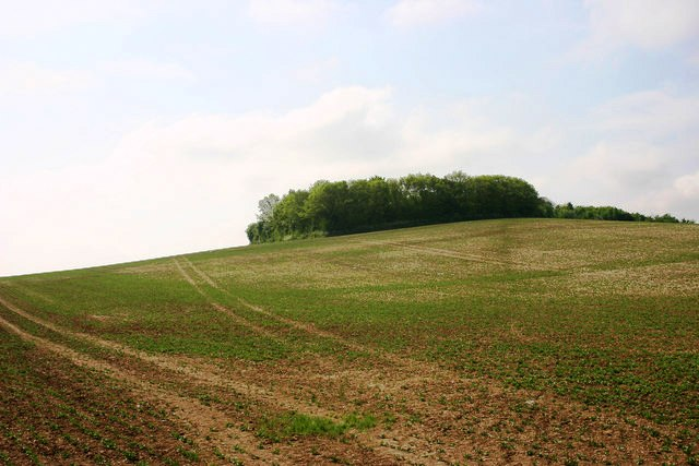 Knut beat Edmund Ironside here on Ashingdon Hill near Southend in 1016AD - Webmasters own photo